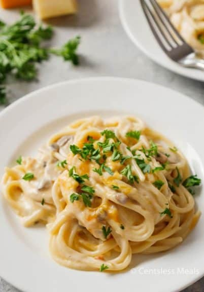 Chicken tetrazzini on a white plate garnished with parsley